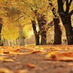 Foliage in autunno